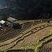 Auf diesen Terrassen wird Reis angebaut.