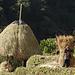 Feldarbeiter bei einem kleinen Dorf zwischen Nayapul und Ullery.