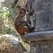 Affe in Pashupatinath