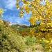 unterwegs bei besten Herbstfarben