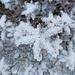 Die Vegetation hüllt sich in eine zarte Schicht Weiss