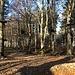 ein Detail vom Waldseilpark