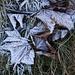 der Reif hält sich lange - und verzaubert die Blätter