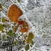 Herbst-Winter-Kombination 2