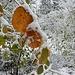 Herbst-Winter-Kombination 2