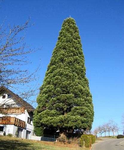 wer hat den sch nsten weihnachtsbaum jedes jahr. Black Bedroom Furniture Sets. Home Design Ideas