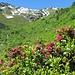 Frühsommer in den Kitzbühler Alpen