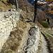 hier ist der Abzweig links zum Wanderweg, geradeaus geht es zu dem Schafen