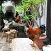 die Güggel und Hühner haben sich in der Beiz die besten Plätze ausgesucht.