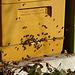 Sogar die Bienen waren unterwegs - so warm war es in der Sonne.Wohl das letzte Mal in diesem Jahr ...