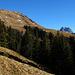Kurz unterhalb der Vorderüntschenalpe weicht der Wald zurück und der Blick wird frei hinüber zum Widderstein und auf die endlosen schneefreien Grasflanken der Hinteren Üntschenspitze.