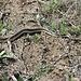 bei der Häutung der Schlange