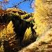 traumhafte Herbstwanderung