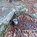 Il tubo di uscita dell' acqua sotto il casottino, qualche centinaio di metri dalla capanna, direzione Pian Grande