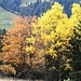 Herbstfarben im Abstieg