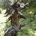 Impressionen vom Rauriser Urwald (wer beobachtet hier wen?)