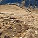 der Weg hinunter auf der Westflanke vom Lütispitz ist steil und schon recht ausgelaufen.