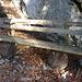 (165) Im Mangfallgebirge West, Wallberg, am Winterweg im Bergwald oberhalb der Wallbergmoosalm auf ca. 1310 m. Entdeckt beim Berglauf (baugleich mit den [http://www.hikr.org/gallery/photo2261105.html?post_id=108442#1 Bänken 44 und 45]) BANK 63 von: Bergläufer: [u shanB]