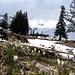 ... Frühlingsboten; die Ski dürfen nun fast in den Sommerschlaf.