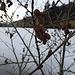 Am gefrorenen Bachtelweiher