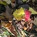 <br />Sonne und Blätter: Liebe fürs Leben