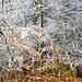 Winterliche Farbenpracht