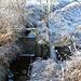 Grenzgraben, Abschlag zum Pfarrwasser