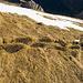 Interessanter Weg beim Abstieg vom Vorgipfel zum Schafbergsattel