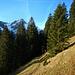 Statt dem Alpweg hinunter zur Geiersbergalpe zu folgen, querte ich von hier den Hang entlang hinüber bis ich bei den Brunnatrög auf den markierten Weg traf.