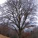 Ein Wintergedicht: <br />Blätter am Baum<br />kaum.