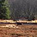 Die letzte Schwarzwaldgams, die ich gesehen habe, lag auf dem Teller.