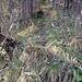 Typischer Trampelpfad: in der Fallätsche, Direttissima Mitte Nord (kurz vor der Höhle mit dem Fallätsche-Büchlein)