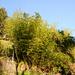 Bambus wächst auch