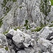 Rückblick beim Aufgang auf den Hauptgipfel, die Rinne zwischen den Felsen ganz rechts aussen bin ich herabgeklettert, gegen den Schluss ist diese Rinne sehr steil.