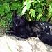 """Im steilen und unwegsamen Gelände von der Tierwies zur Schwägalp habe ich im unteren Teil am Wegrand eine halb ausgetrocknete Katze gesehen die sich kaum mehr bewegte, hier hatte es zu diesem Zeitpunkt um die 30 Grad. Die Katze tat mir Leid, bei diesen vielen Wanderer könnte sie noch zertrampelt werden. Ich nahm sie auf den Arm und trug die Katze durch schwieriges Gelände bis hinunter an den Anfang der Felsen. Wanderer die mir entgegen gekommen sind haben mich ungläubig angeschaut und haben wohl gedacht, """"der Spinner geht mit seiner Katze wandern"""" mit einem Wanderer habe ich mich noch unterhalten, der mir den Tipp gab, es könnte sich evt. um eine Katze vom Bergrestaurant Tierwies handeln. Ich habe die Katze an einem geschützten schattigen Plätzchen hingelegt und habe meine Wanderung bis zur Schwägalp fortgesetzt. Nachher habe ich noch der Wirtin vom Rest. Tierwies telefoniert und es hat sich tatsächlich herausgestellt, dass es eine Katze von Ihr sein muss. <br /><br />Wie mir die Wirtin vom Restaurant sagte, geht die Katze fast jeden Tag mit zufällig ausgewählten Wanderer von der Tierwies bis an den Anfang der Felsen vom Säntis hinunter, das sind ja ca. 2 Kilometer und 500 Höhenmeter, und sie geht jeden Morgen wieder zurück zum Restaurant. Die Katze ist sicher von der Hitze überrascht worden und hat sich mitten auf dem Wanderweg unter einem Grasbusch hingelegt, sie lag wie halb Tot am Wegrand, irgend jemand musste ihr ja helfen."""