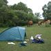 Wer nachts das Zelt aufschlägt, darf sich morgens über Pferde nicht wundern...