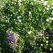 am Weg viele Blumenwiesen
