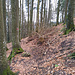 Markanter Baum am Abstieg zum Sagfleckl.