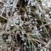 Wasserperlen zieren die Gräser