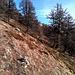 Sur le sentier menant à Brischeru