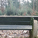 (199) Heute hat BANK 76 einen herrlichen Blick auf den immerhin gut mit nachwachsenden Jungbäumen besetzten Fichtenwald.