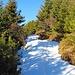 Beim Wald angekommen geht es über noch teils gut sichtbare Wegspuren auf die Südseite vom Anfang des Südwestgrates und bis zu einer Hütte mit einer fabelhaften Aussicht bis zu den Davoser-Bergen.
