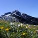 Die Binnelalpe in ihrer Blumenpracht im Mai. Der Austiegsweg folgt der Schneelinie (hinten).