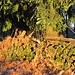 die Sonnenstrahlen treffen auf den hübschen, vermodernden, Stapel Holz