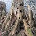 Ein hohler Baumstumpf schaut mich aus vielen Augen an
