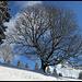 Big Baum