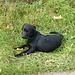 Blacky geduldig beim Oberen Brüggli...