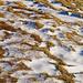 Die kleinen Schönheiten des Lebens: Gras und Schnee in der Abendsonne.