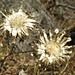 Herbst-Trockenblumen