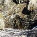 l'anfratto dove sorge l'acqua per l'alpe Stavelli